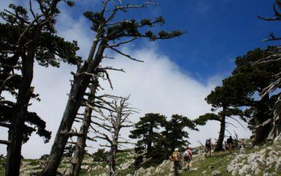 Nei Pini Loricati la storia dei cambiamenti climatici