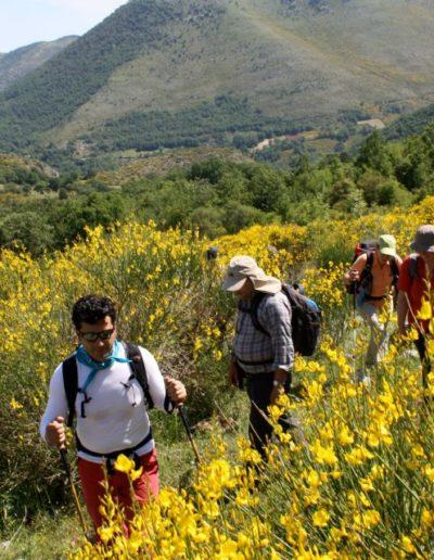 Escursionisti sul Pollino fra ginestre e piante varie
