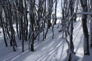 Paesaggio invernale del Pollino