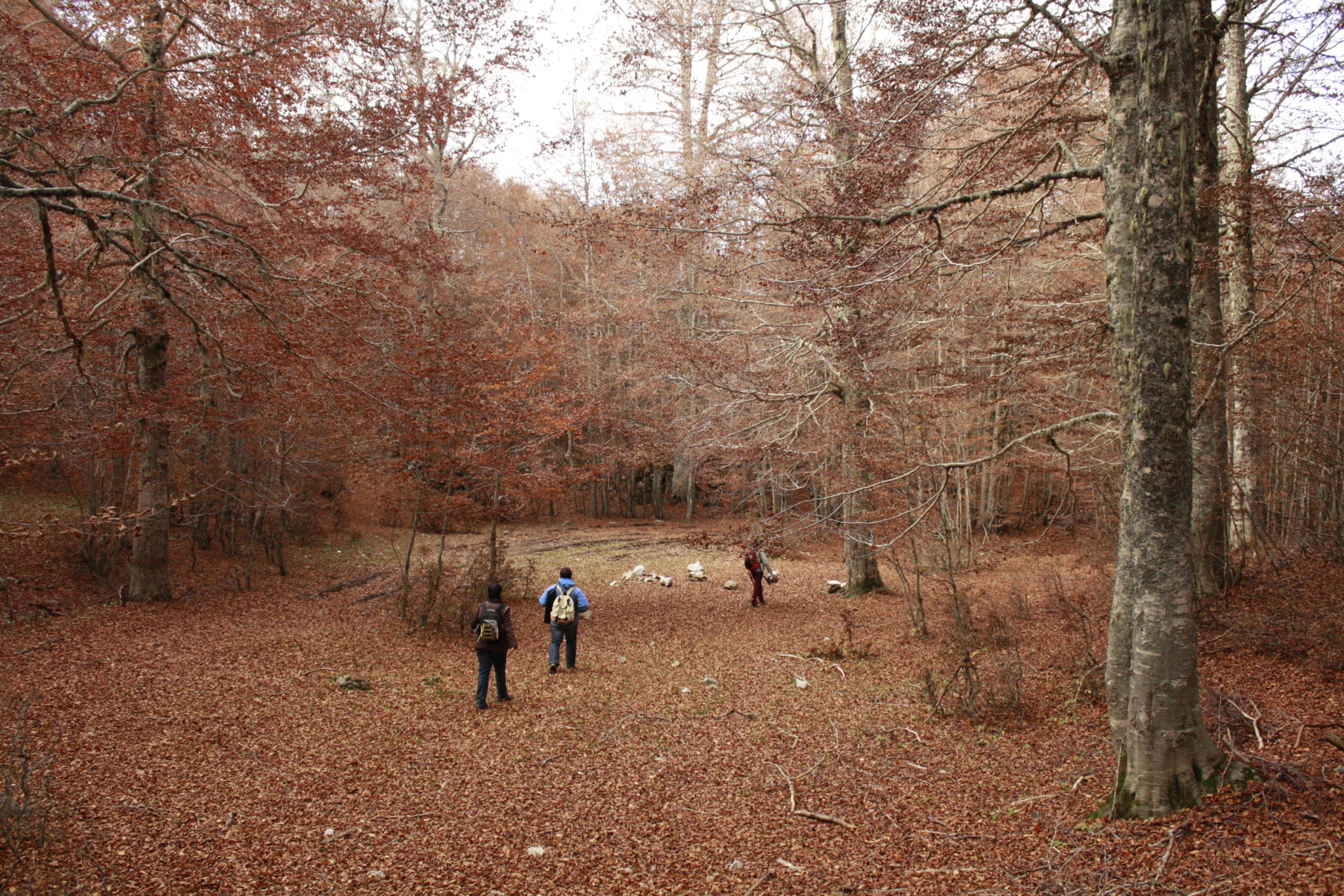 Un paesaggio autunnale nel Parco del Pollino